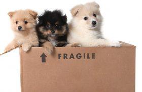 584003-puppies